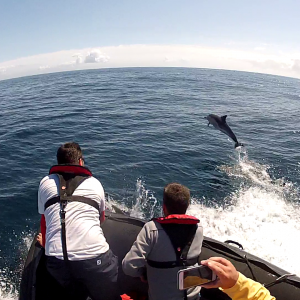 Rencontre magique avec les dauphins