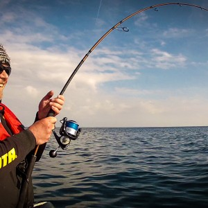 Pêche au gros dans le Morbihan