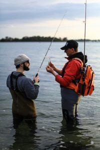 Choix des leurres pour la pêche au bar du bord