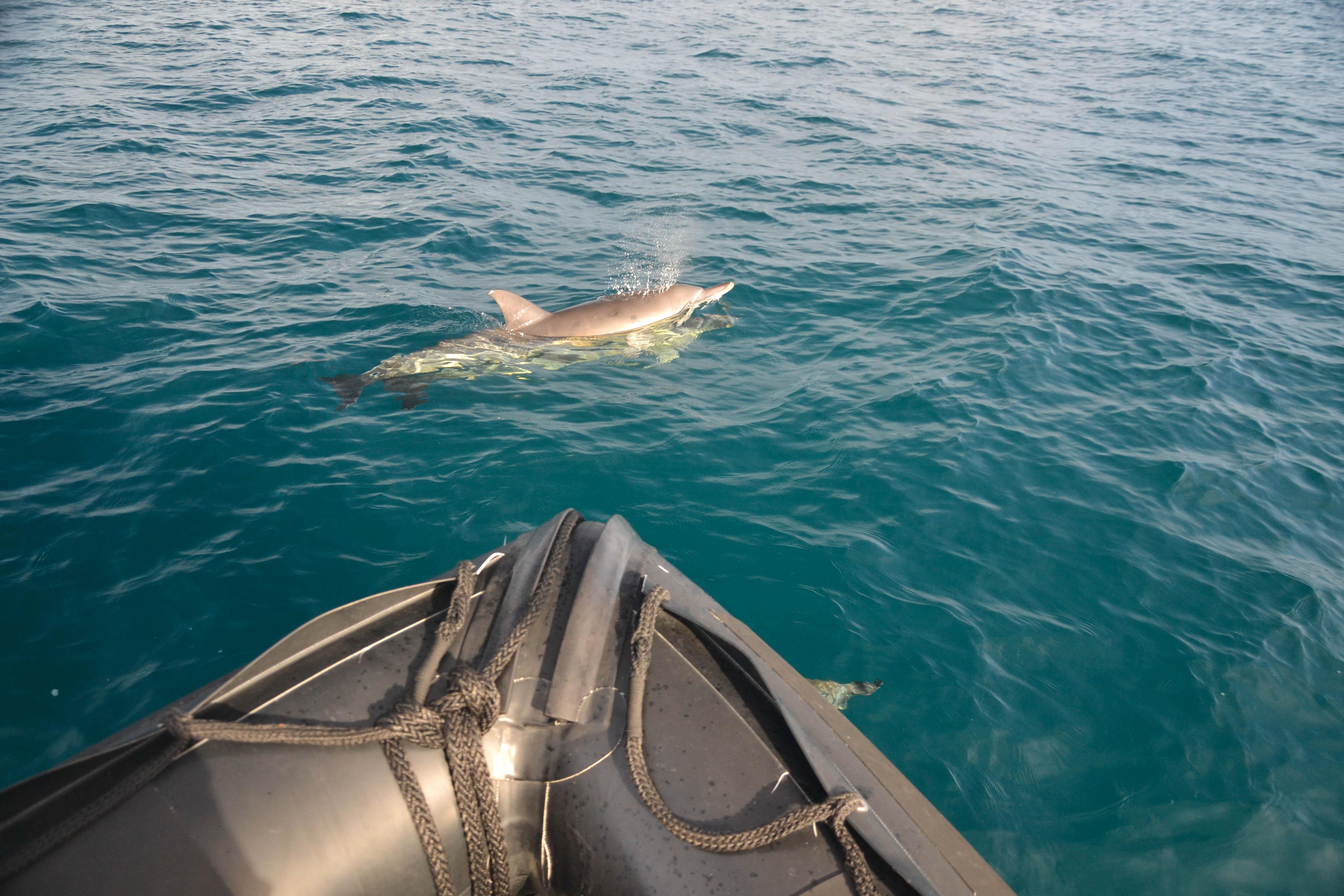 Rencontre avec les dauphins bretagne
