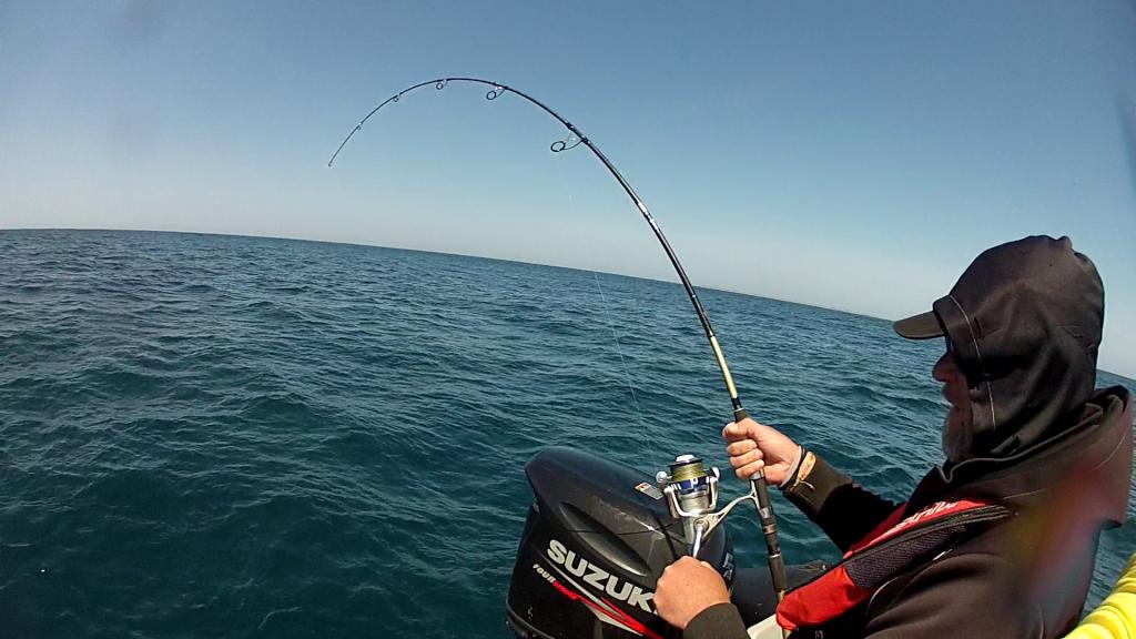 pêche au requin 2017 2