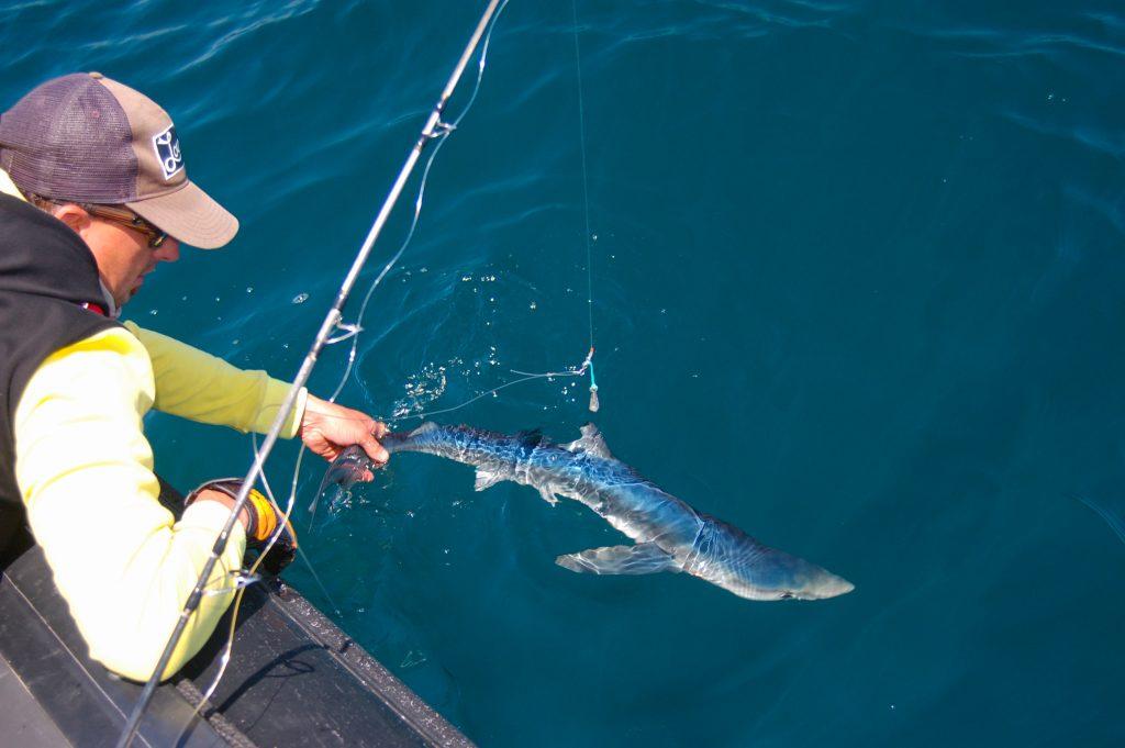 pêche au requin 2017 3