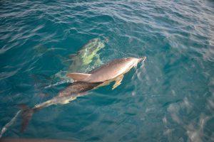 promenade avec les dauphins de l'ile de groix